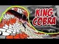 Download KING COBRA AMAAZIA WATER PARK mp3