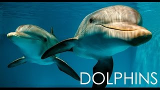 🐬 Dolphin Clearwater Marine Aquarium Winter & Hope, from Dolphin Tale 2017