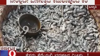 No Water in Kamalapura Lake Thousands of Fish Dies