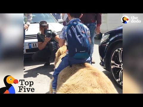 Bear Chained For Selfies Finally Runs Free Animals Freedom Stories The Dodo Top 5