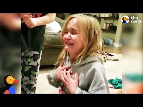 Xxx Mp4 Little Girl Reacts To Her New Rescue Dog The Dodo 3gp Sex