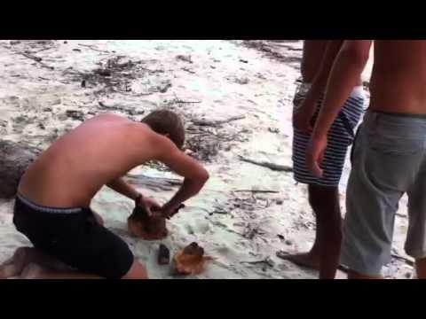 Kokosnød nydes