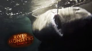 The Greenland Shark - River Monsters