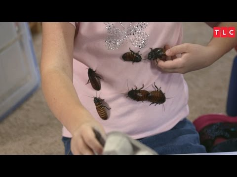 Obsessed with Collecting Cockroaches | My Kid's Obsession