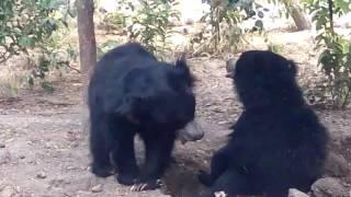 Funny bear.com