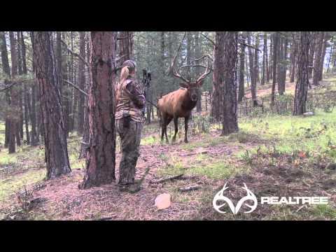 15 Yard Files Female Bowhunter Stares Down Giant Bull Elk at 4 Yards