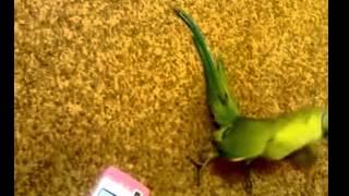طائر غريب رقص جميل مهستر مضحك ضحك وناسه كوميديا.