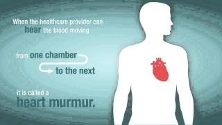 What is a Heart Murmur and How Does it Relate to Valve Problems?
