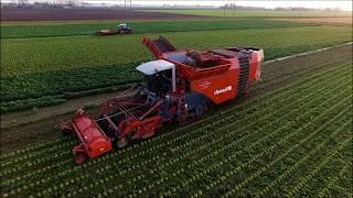 Dewulf Kwatro / Grimme / Knolselderij / Celeriac / Knollensellerie / Drone Landbouw / Agriculture