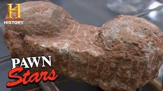 Pawn Stars: Dinosaur Eggs | History