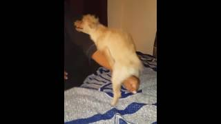 Dog humping arm funny as hell!