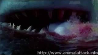 Movie Stills From Aatank (1996)