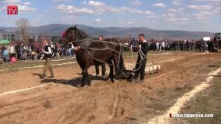 Състезание за силни коне днес, на Тодоровден, проведоха в Гоце Делчев
