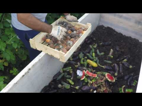 Выращивание земляных червей в домашних условиях 94