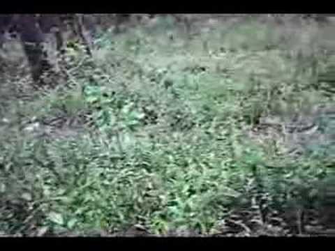 Xxx Mp4 Woodsball Comando IWIA 3gp Sex