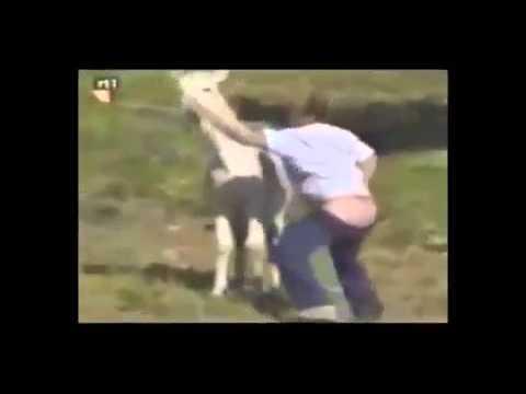 Секс приколы с ишаком