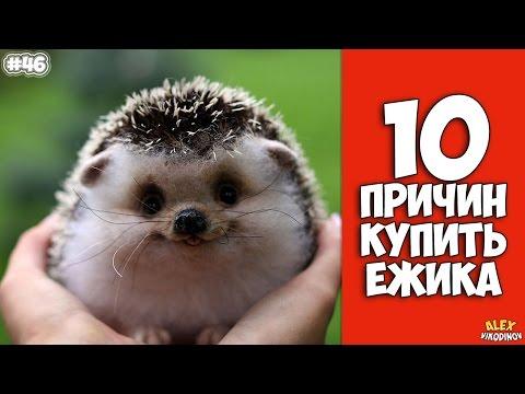 photos of single girls ёжик № 175537