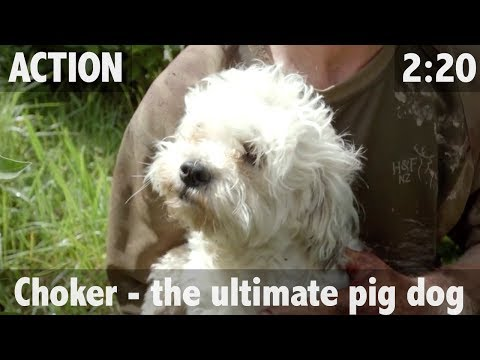 Choker -The Ultimate Pig Dog - ULTIMATE FISHING TV