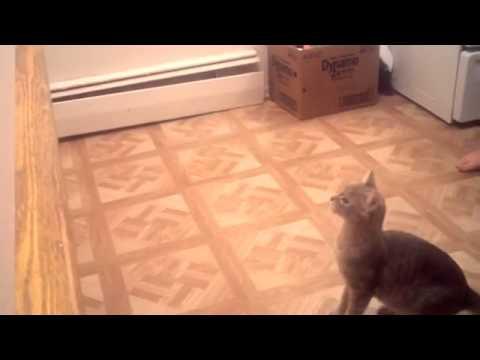 Katzensprung - Fail