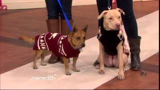 Push Pushi feat. on Meredith Viera Show 12 16 2014