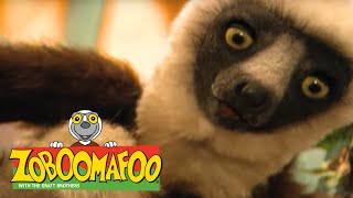 Zoboomafoo 137 - Cats (Full Episode)