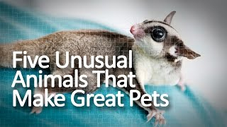 Five Unusual Animals That Make Great Pets