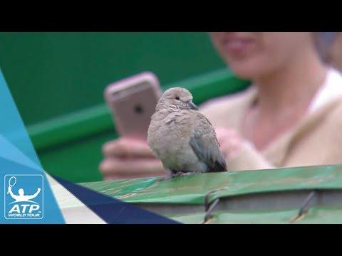 Bird Disrupts Nadal vs. Edmund Match At Critical Moment Monte Carlo 2017
