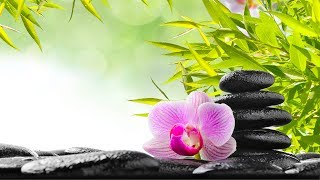 Zen Meditation Music, Relaxing Music, Music for Stress Relief, Soft Music, Background Music, ☯3256
