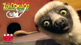 Zoboomafoo | Lemur meets slithering snakes | Episode Animals for Kids
