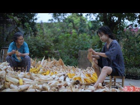 金黄的季节,� 满了收获的喜悦和玉米的香甜 Corn Liziqi Channel