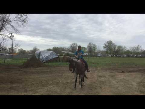 Xxx Mp4 Dally Day 30 April 23 2017 Introducing The Bullwhip Under Saddle 3gp Sex