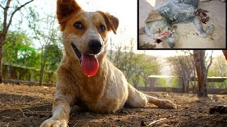Tony healed & happy! (Street dog in India rescued almost dead.)