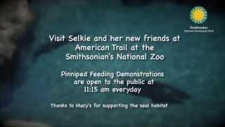 Seal Splashdown at the Smithsonian