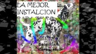 comercial Dalmata´s Corporation