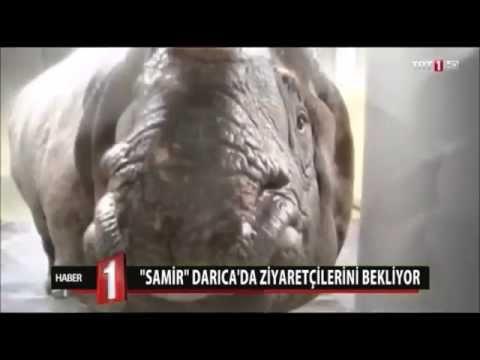 Samir Gergedan Darıca Hayvanat Bahçesinde