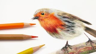 How To Draw Feathers with Colored Pencil