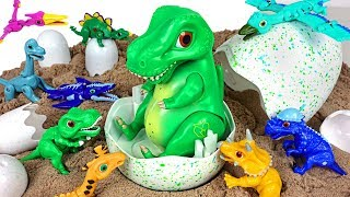 Dino Mecard talking egg tiny dinosaur Tyrannosaurus appeared!! - DuDuPopTOY