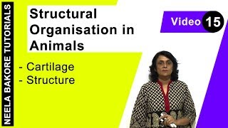 Structural Organisation in Animals - Cartilage - Structure