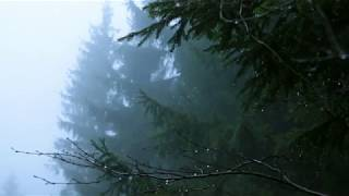 Sounds for Deep Sleep, Relaxation 10 Hours / Rain in Spruce Forest, Fog, Swaying Branches in Wind