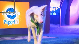 Puppy Profile: Moonshine the Border Collie | Puppy Bowl XIV