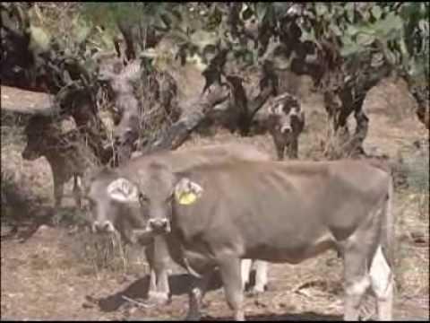 Rancho La Turicata Video.flv