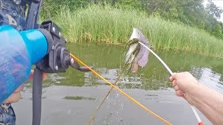 Bowfishing Tilapia for Dinner with Compound Bow