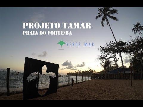Tartarugas Marinhas: Uma visita ao Projeto Tamar na Praia do Forte / BA