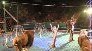 Orribile incidente al circo, i leoni attaccano il domatore