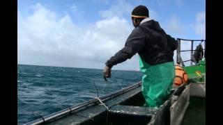 Chokka Fishing in the Eastern Cape