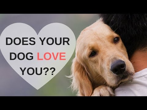 Xxx Mp4 8 Ways To Know Your Dog Loves You 3gp Sex