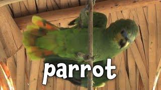 Types of Birds - Learning bird names for Children