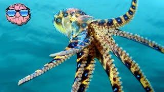 Top 10 Most VENOMOUS ANIMALS On EARTH