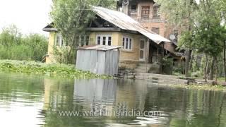 Lotus eating life along Dal Lake in Srinagar, Kashmir, India