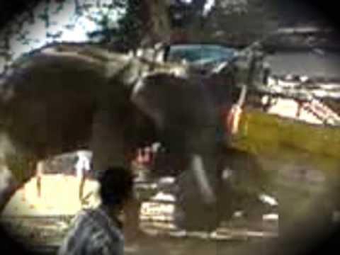 Cuando el elefante se enfada